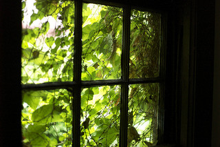 A green window